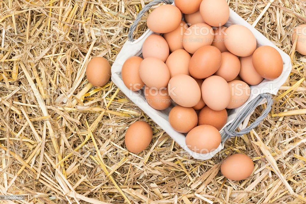 Huevos de Gallina photo libre de droits