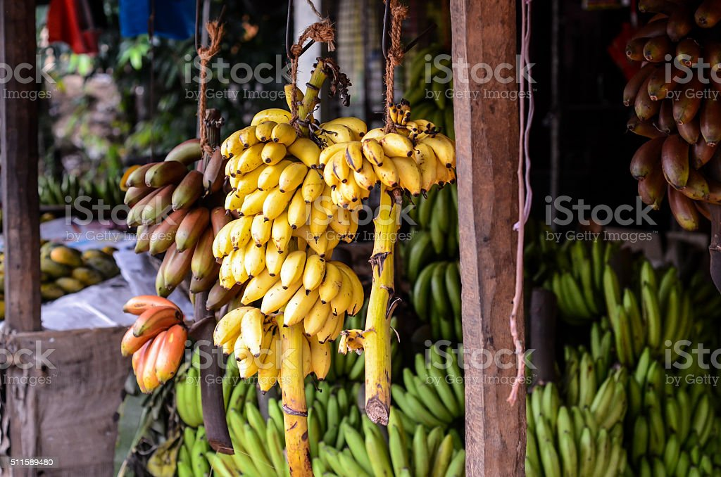 Huge bunches of bananas on sale in Sri Lanka stock photo
