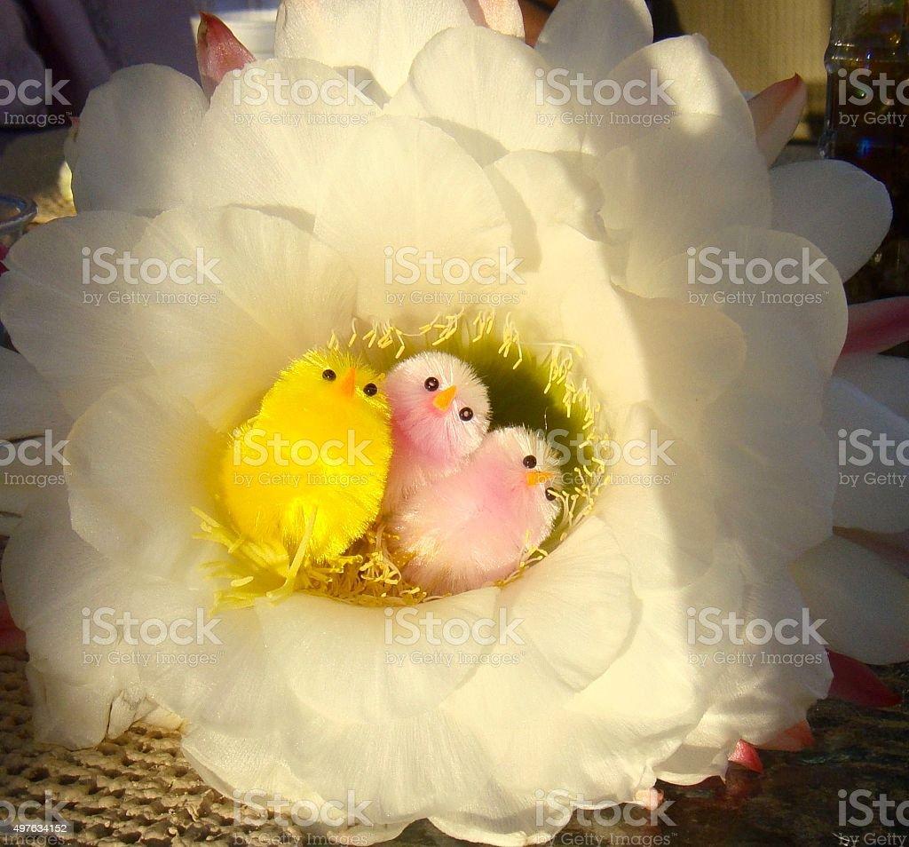 Huge Cactus Flower with Pastel Easter Birdies stock photo