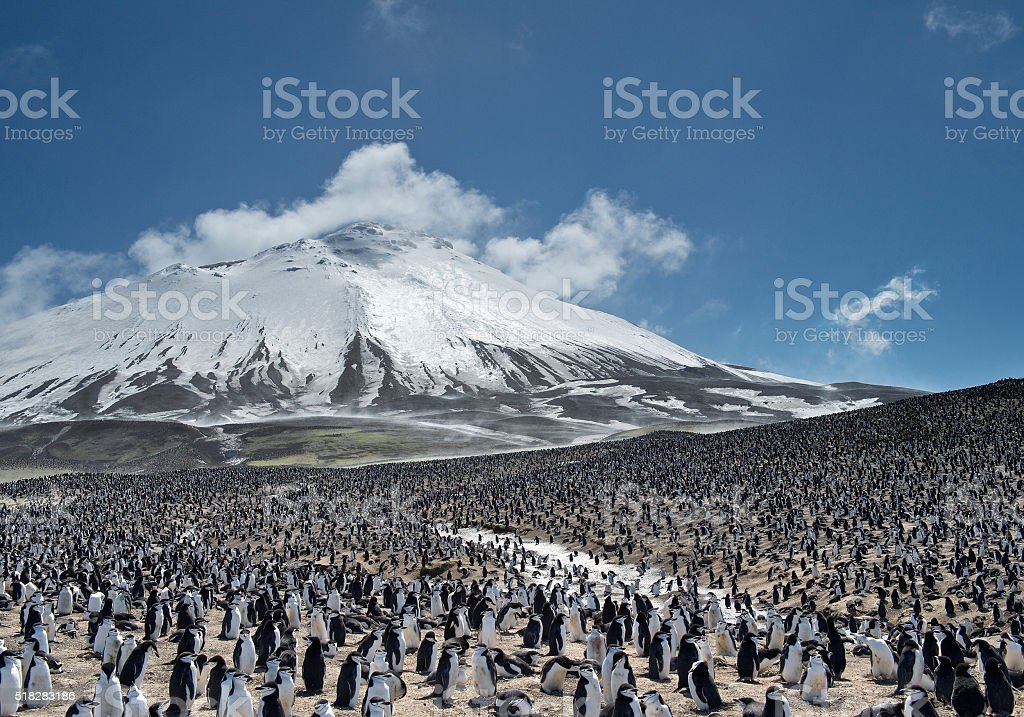 Huge colony of penguins with snowy mountain stock photo