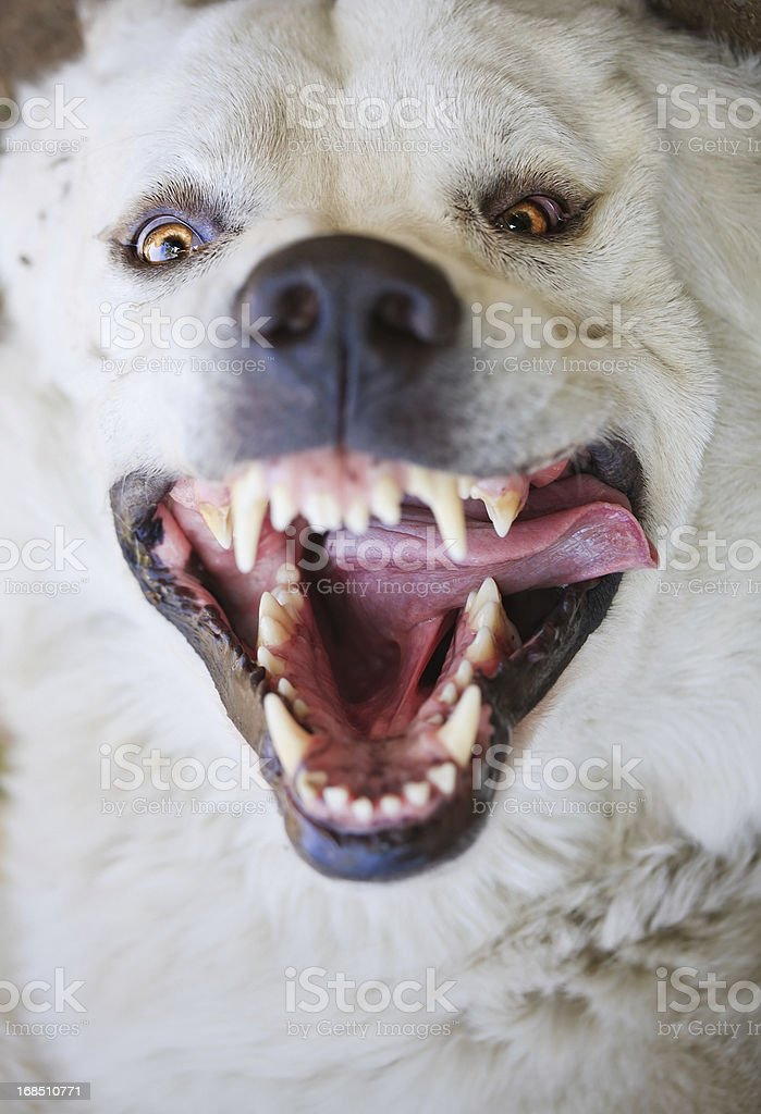 Wild dog attacking the cameraman.