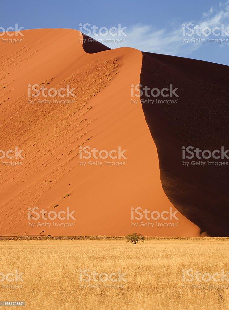 Huge dune Small tree stock photo