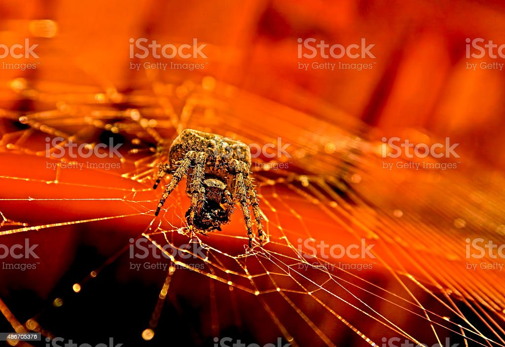 huge gray spider royalty-free stock photo