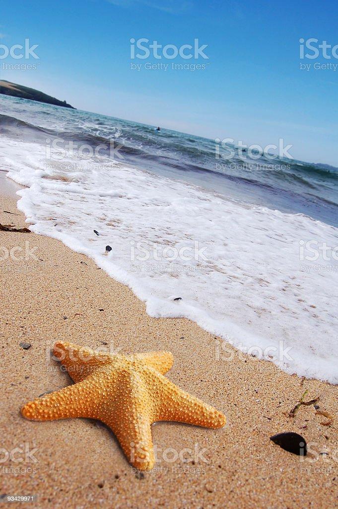 Huge orange starfish on the beach near the water royalty-free stock photo