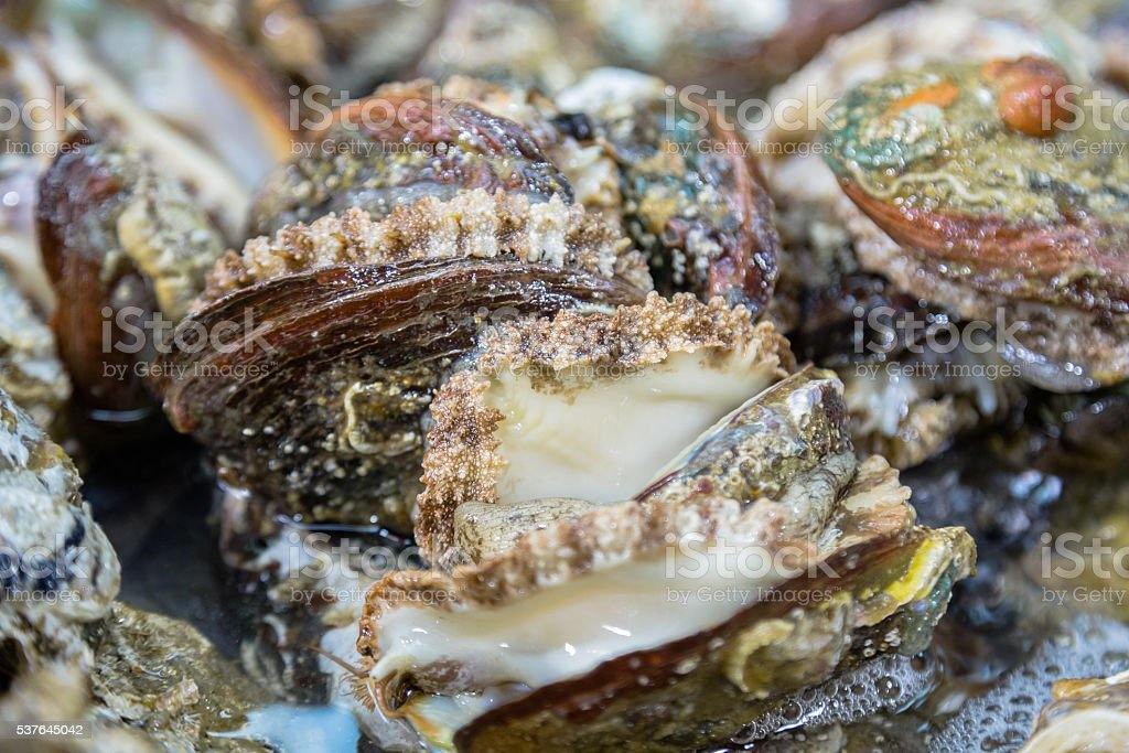 Huge Oysters stock photo