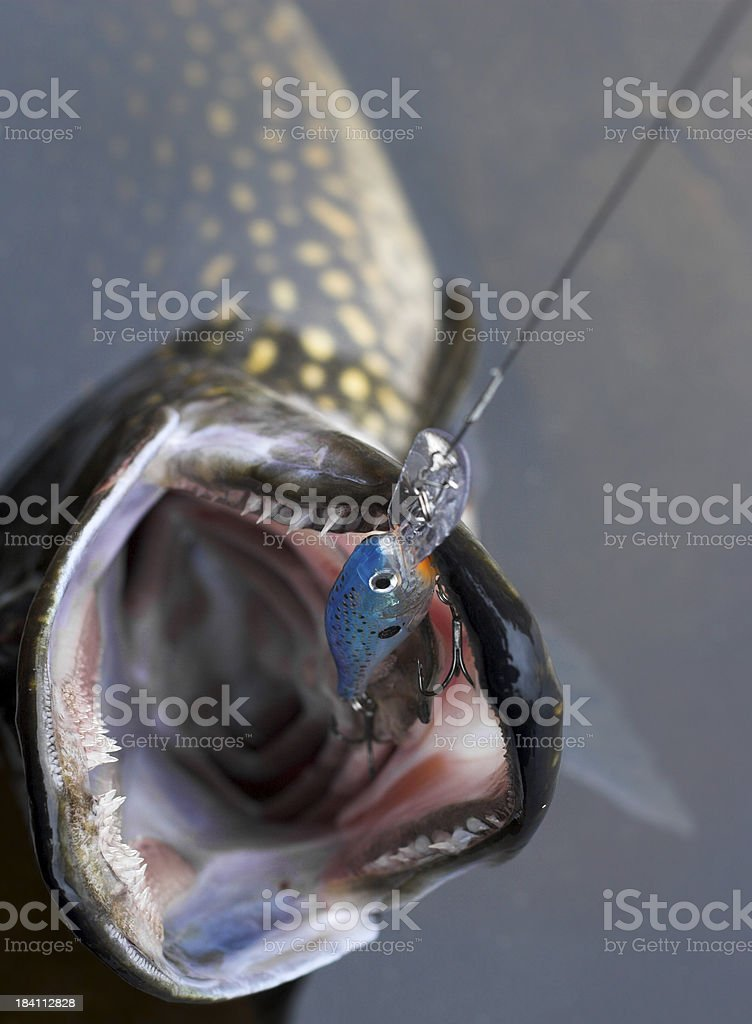 Huge pike stock photo