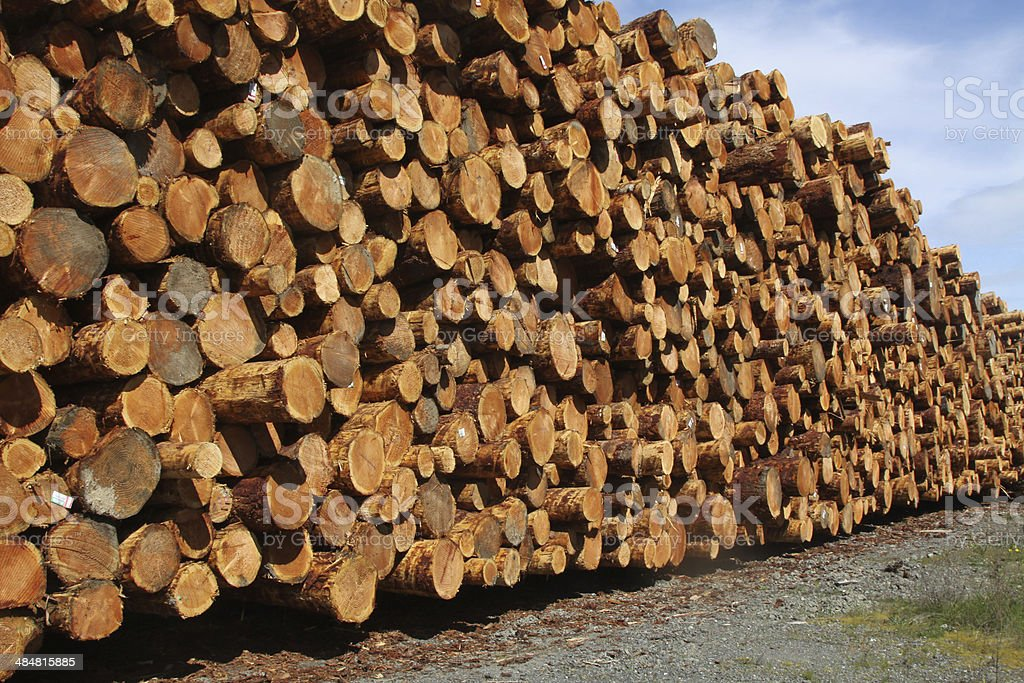 Huge Pile of Raw Logs stock photo