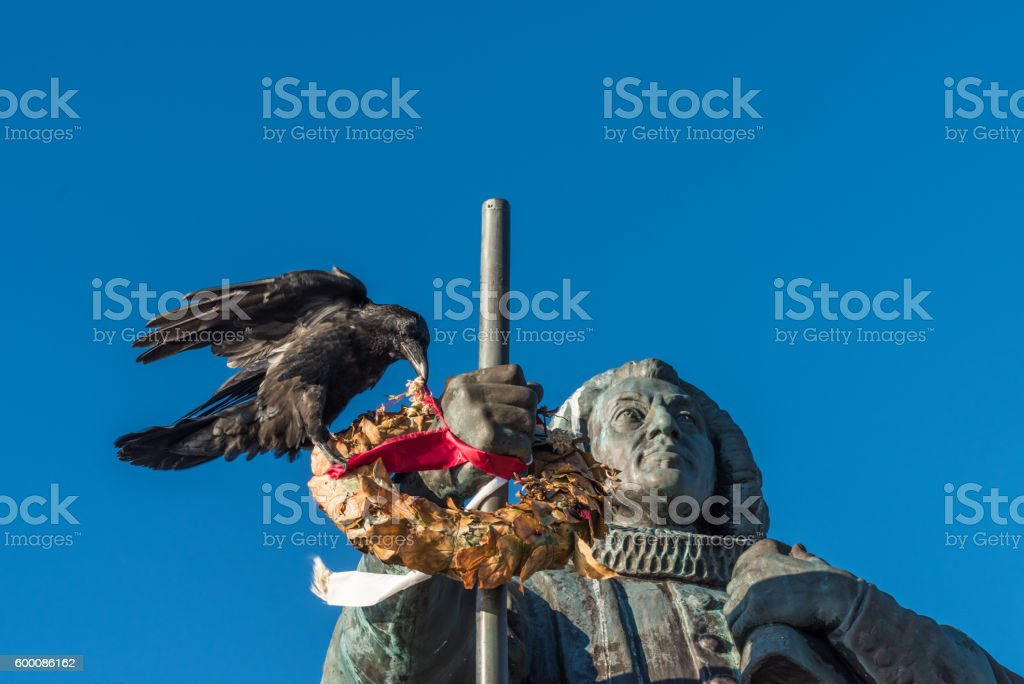Huge raven picking flowers from a wreath, Nuuk, Greenland stock photo