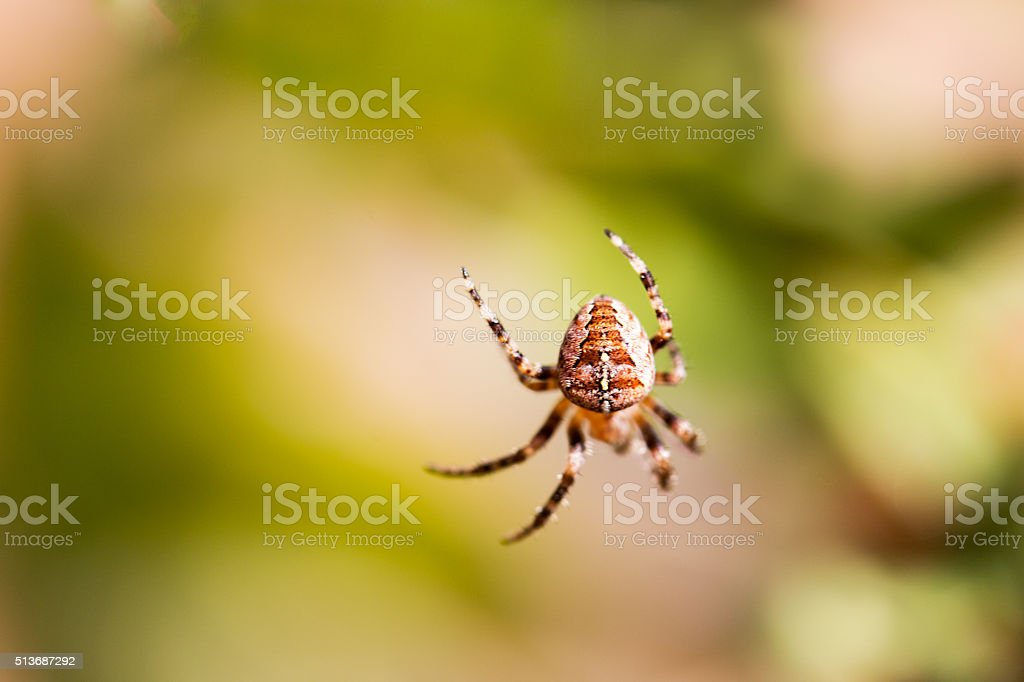 huge spider close up stock photo