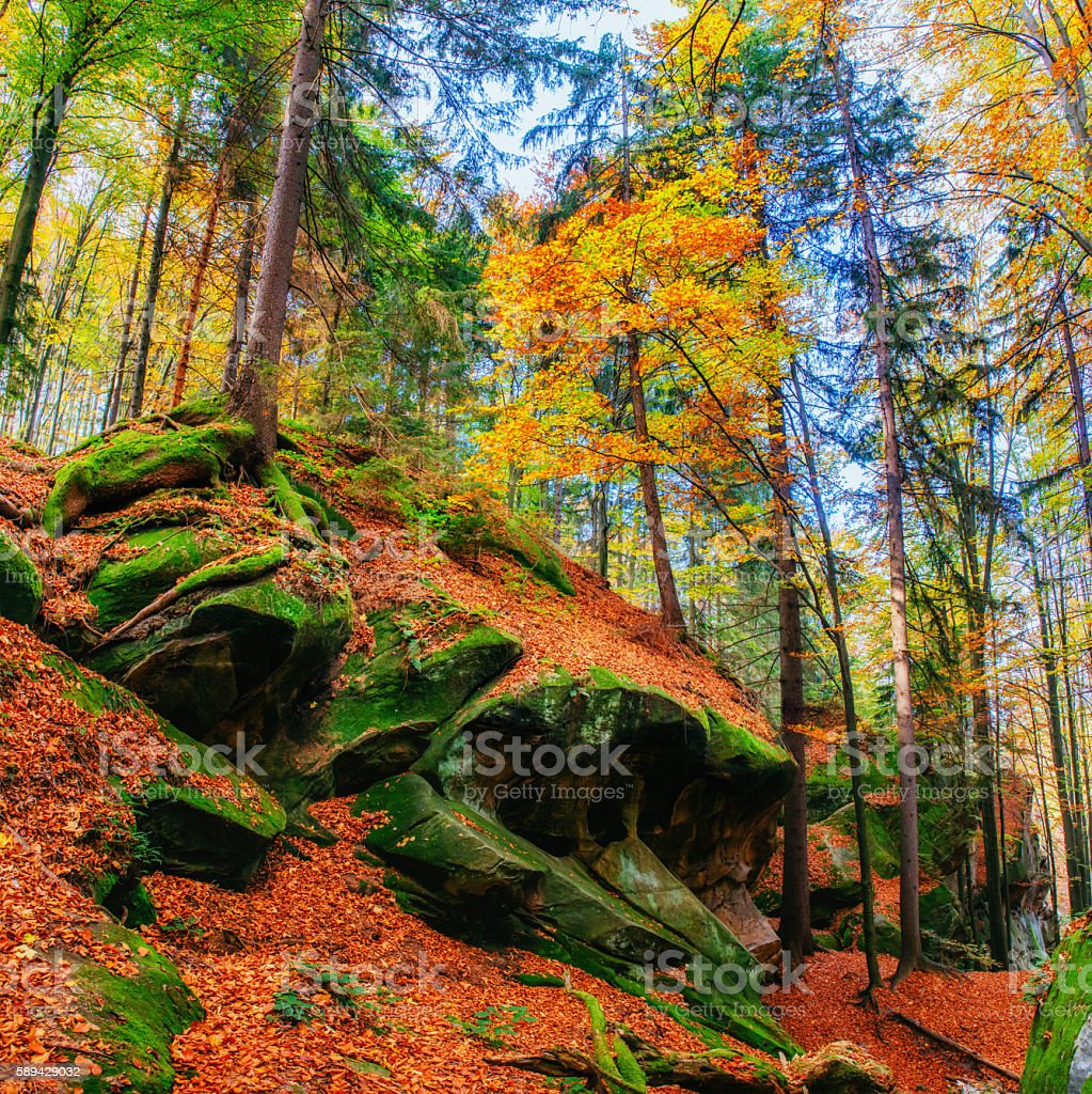 Huge stone in the forest area. Fantastic sunny day stock photo
