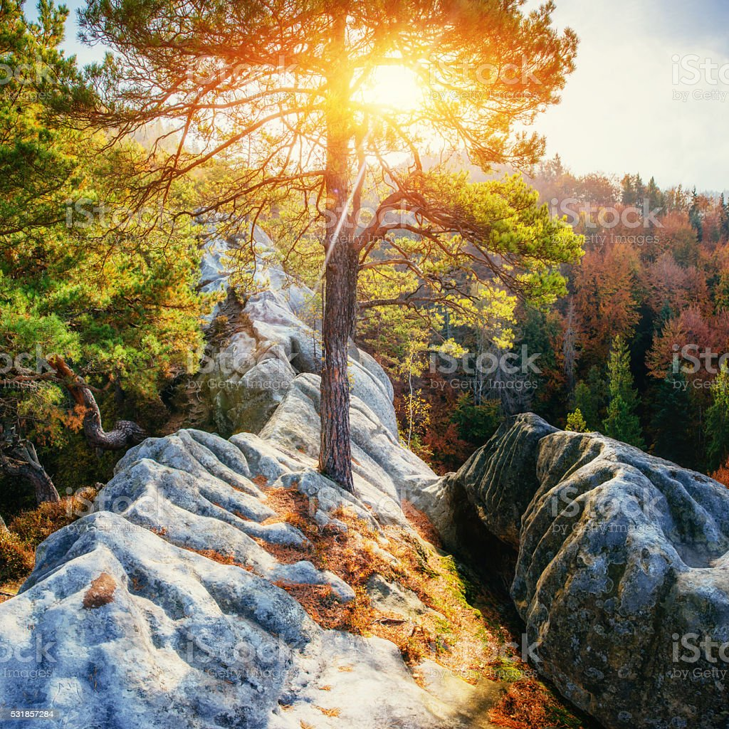 Huge stone in the forest area, in the sun. stock photo