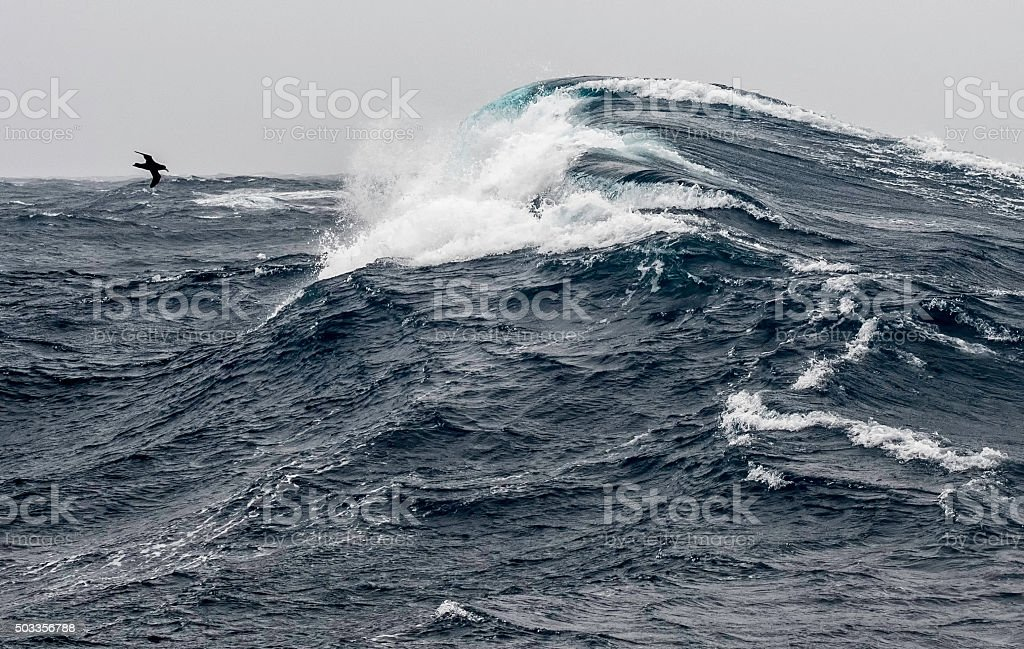 Huge Wave, Small Bird  -  Drake Passage stock photo