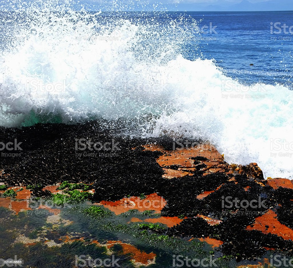 Huge wave sprays coastal mussel bed stock photo