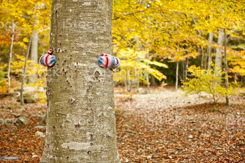 Hugging a tree in autumn stock photo