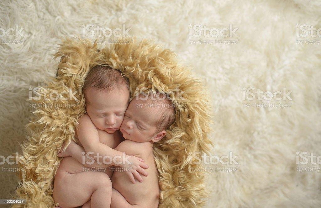 Hugging Newborn Twins royalty-free stock photo