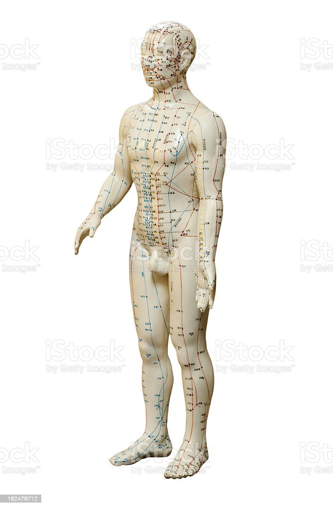 Human Acupuncture Model on White royalty-free stock photo
