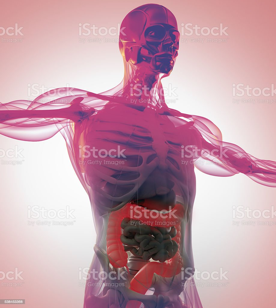 Human anatomy, colon. Xray-like view. Colon highlighted. 3d illustration. stock photo