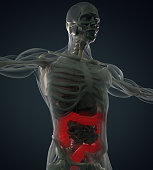 Human anatomy, colon. Xray-like view. Colon highlighted. 3d illustration.
