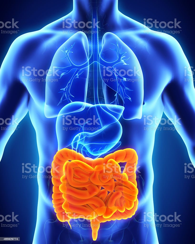 Human anatomy focused on intestine in orange color stock photo