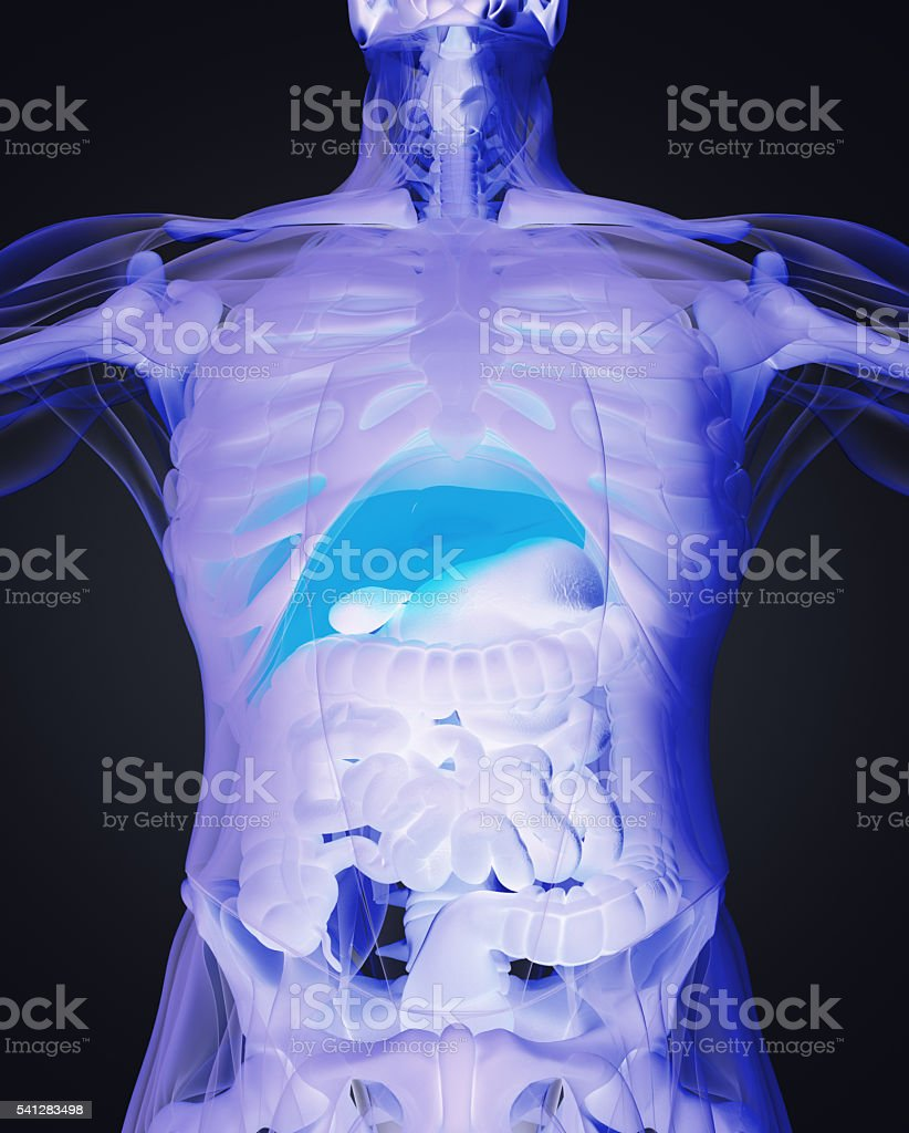 Human anatomy liver. Xray like view, futuristic scan. 3d illustration. stock photo