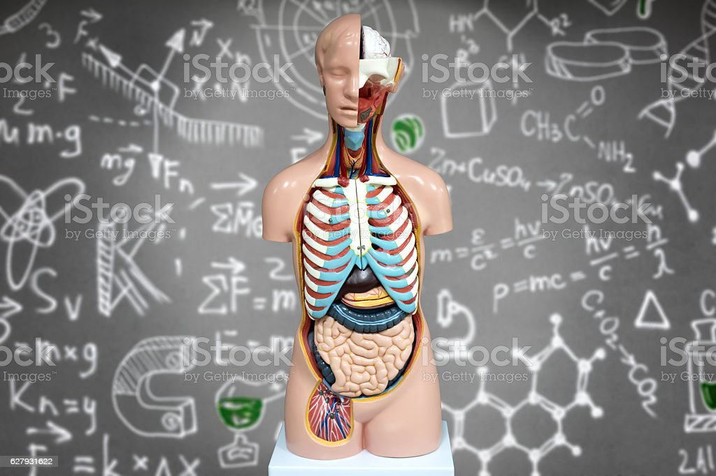 Human anatomy mannequin on the background of chemical formulas stock photo