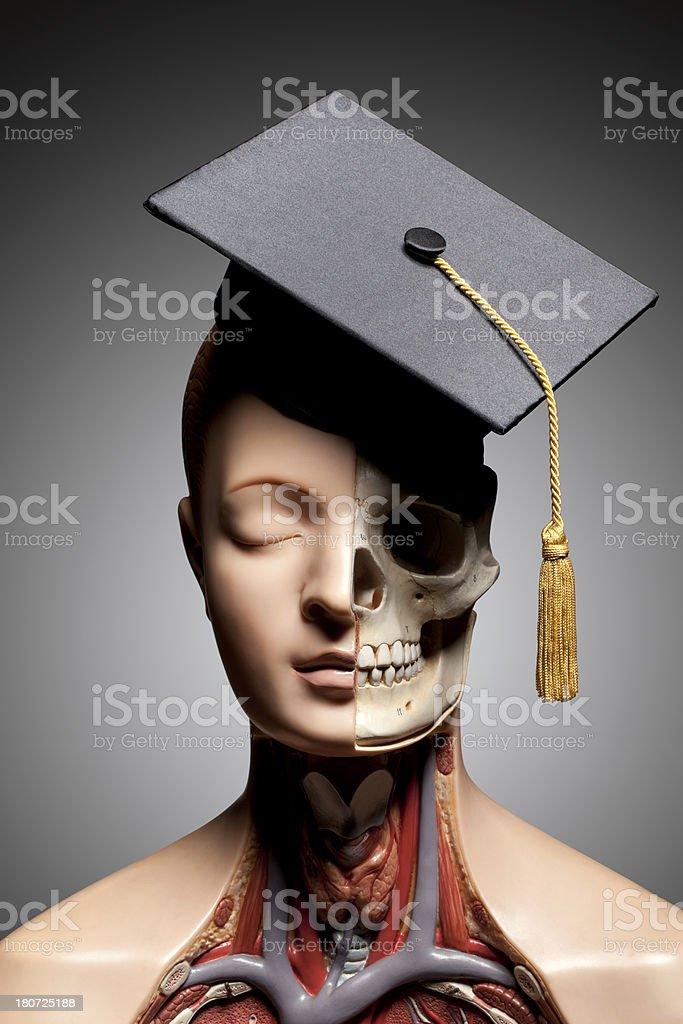 Human anatomy model with graduation cap royalty-free stock photo