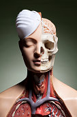 Human anatomy model with protective face mask