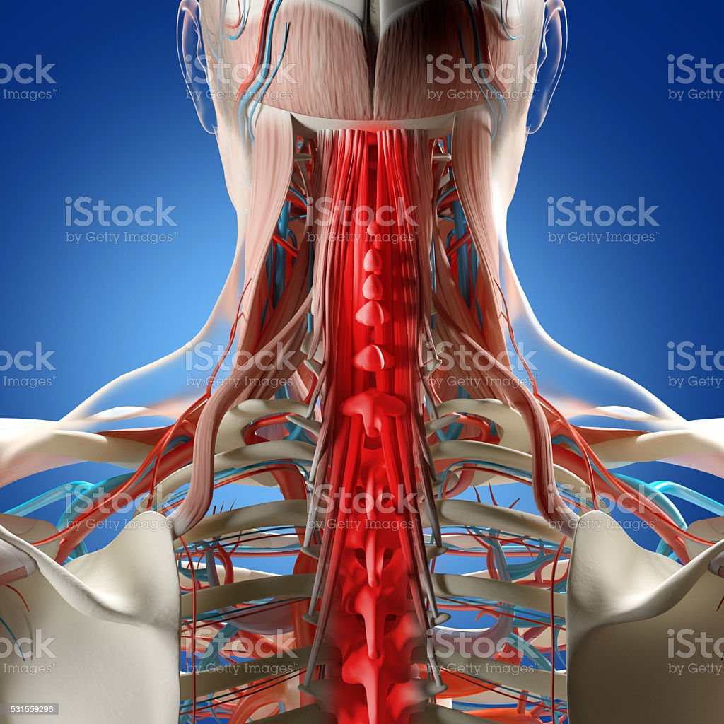 Human anatomy, neck and spine pain. 3d illustration. stock photo