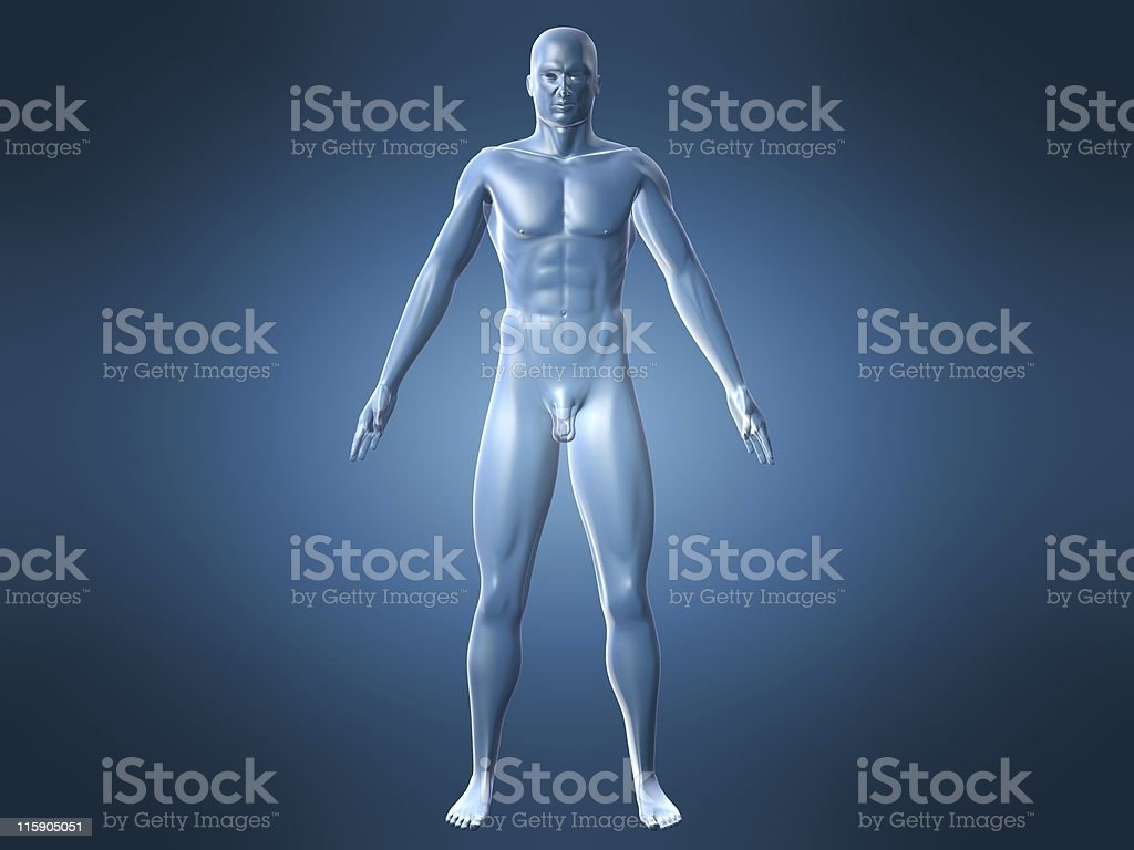 human anatomy royalty-free stock photo