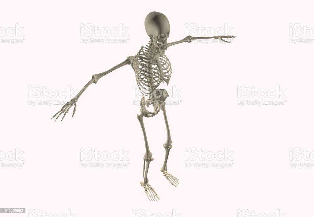 Human Anatomy Skeletal System stock photo