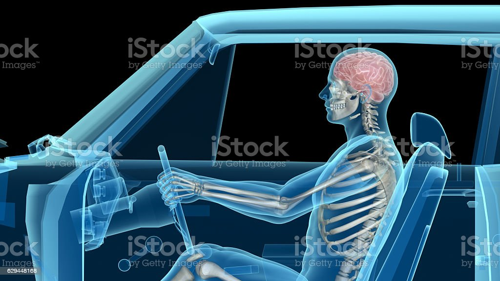 Human anatomy while driving a car, bones and brain stock photo