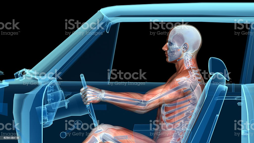 Human anatomy while driving a car, muscles, bones and brain stock photo
