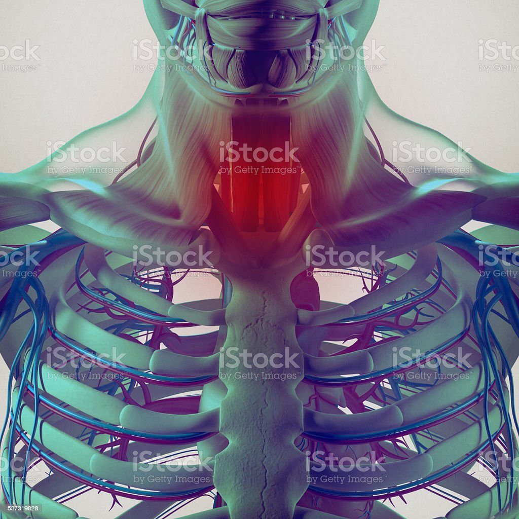 Human anatomy,sore throat infection, chest, rib cage. 3d illustration. stock photo