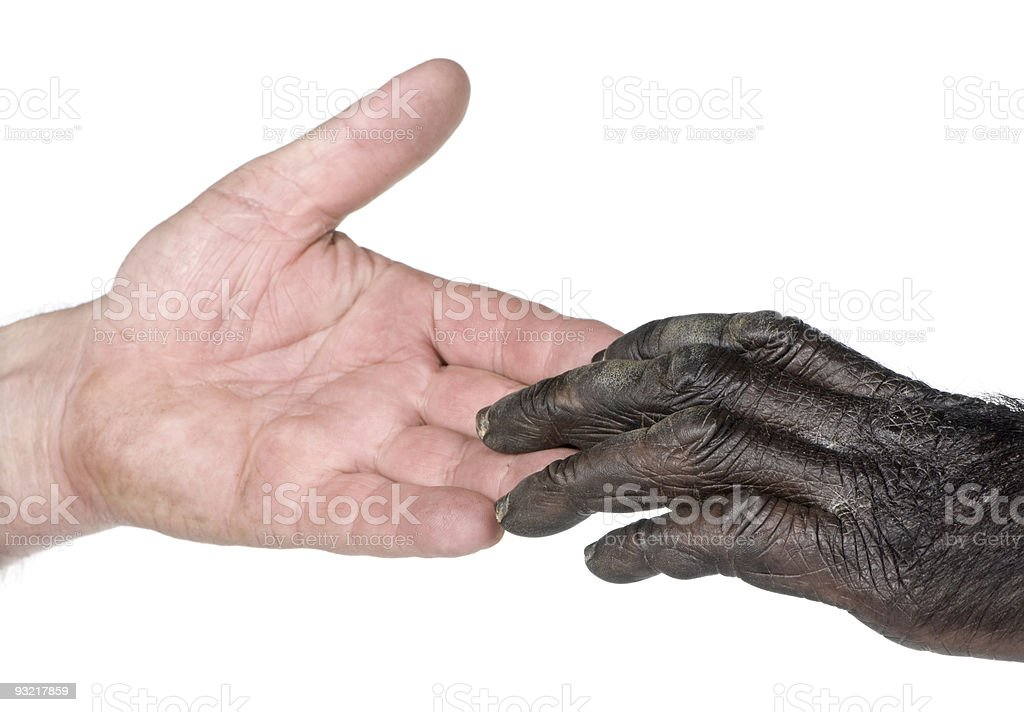 Human and monkey joining hands stock photo