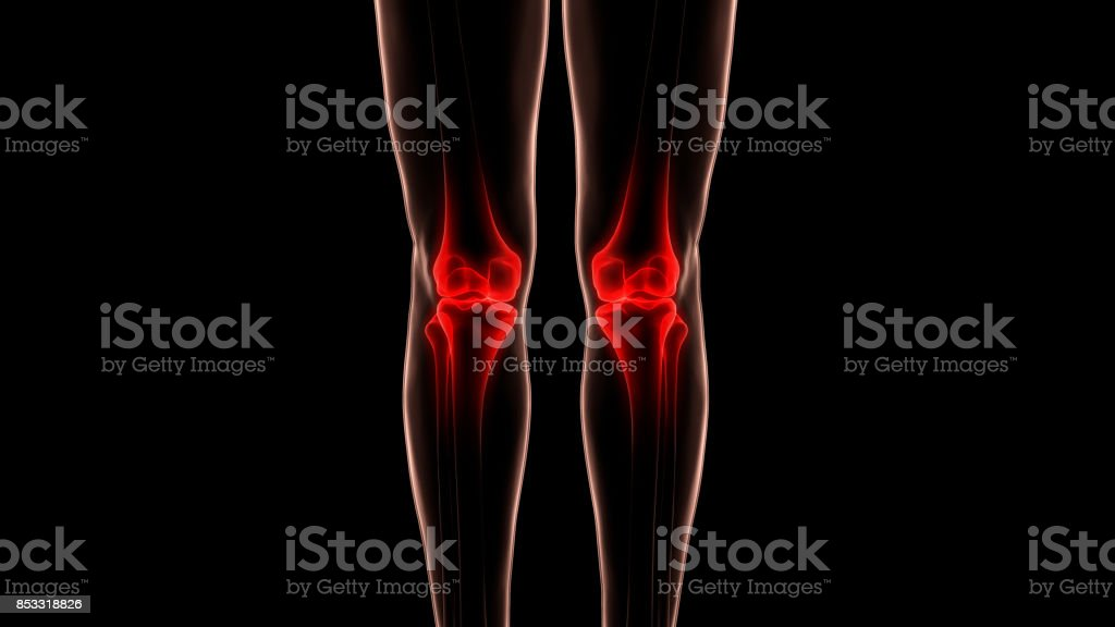 Human Body Bone Joint Pains Anatomy (Knee Joint) stock photo