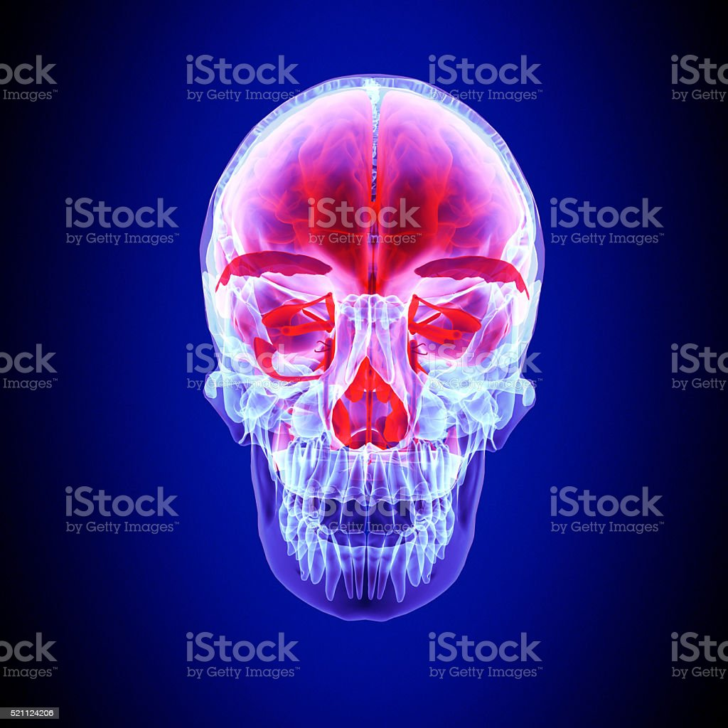 human body face stock photo