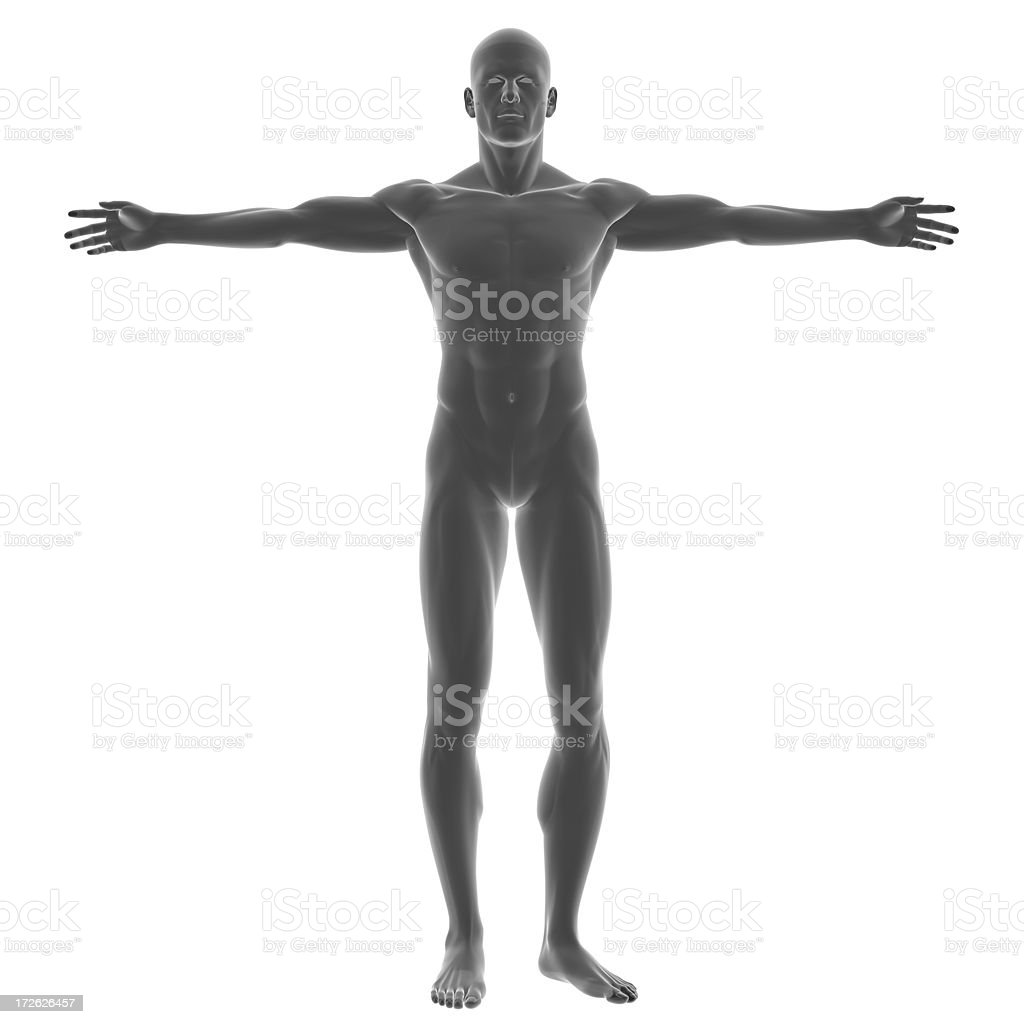 Human body of a man for study royalty-free stock photo