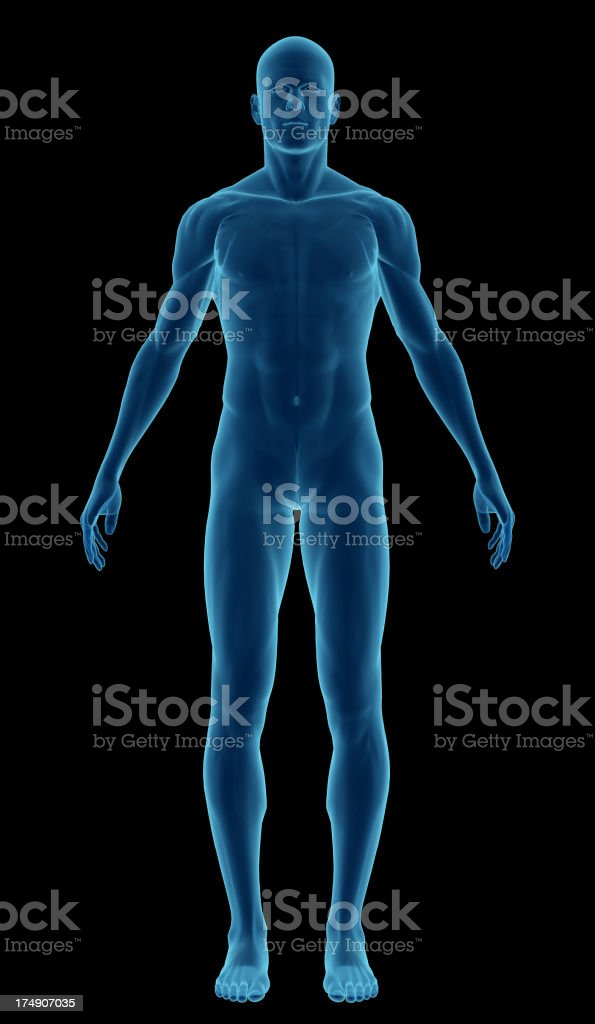 Human body of a man highlighting your muscles stock photo