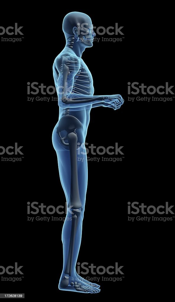 Human body of a man with skeleton for study royalty-free stock photo