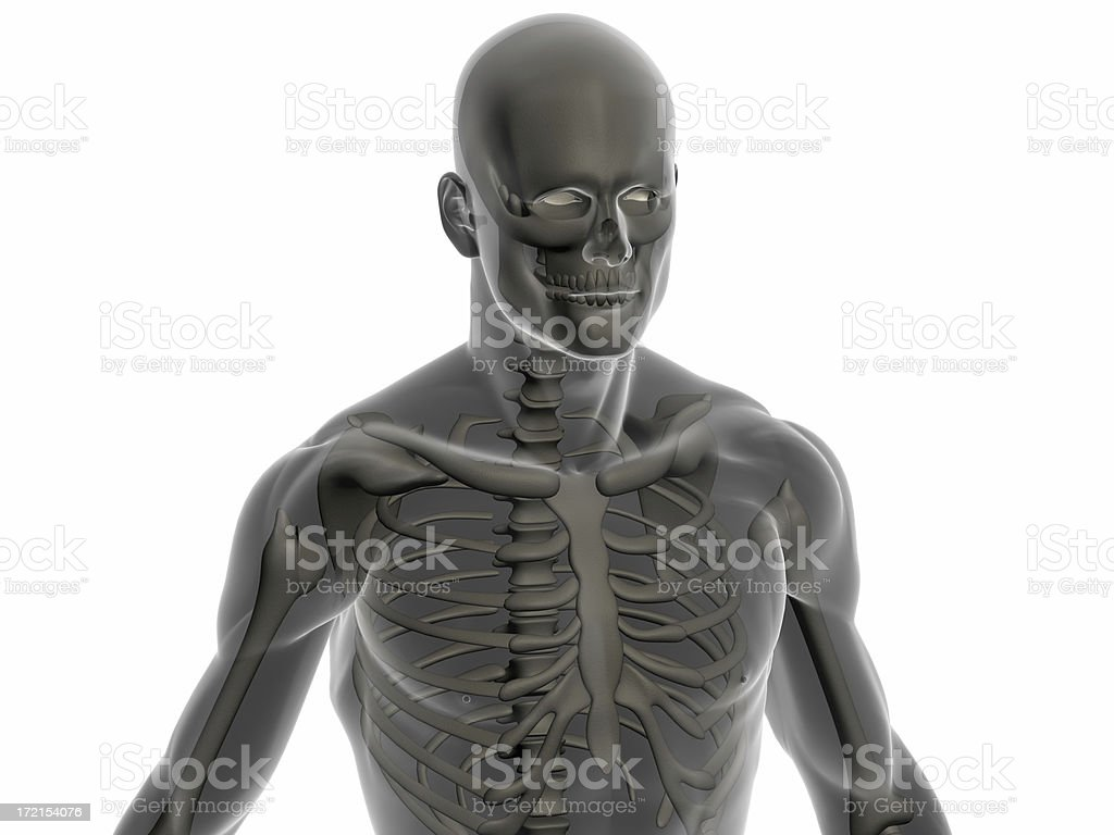 Human body of a man with skeleton royalty-free stock photo