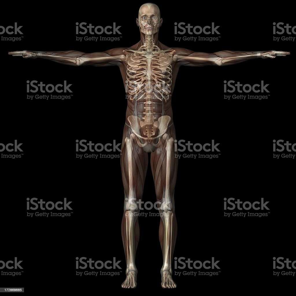 Human body of a man with transparent muscles and skeleton stock photo