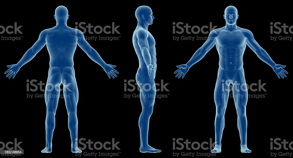 Human body of a slim man, for study royalty-free stock photo