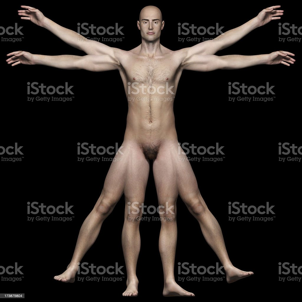 Human body of a Vitruvian man for study stock photo