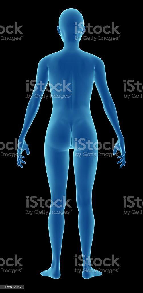 Human body of a woman for study stock photo