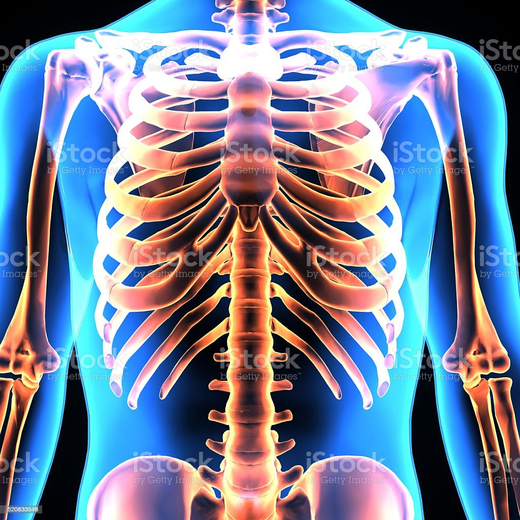 human body ribs stock photo