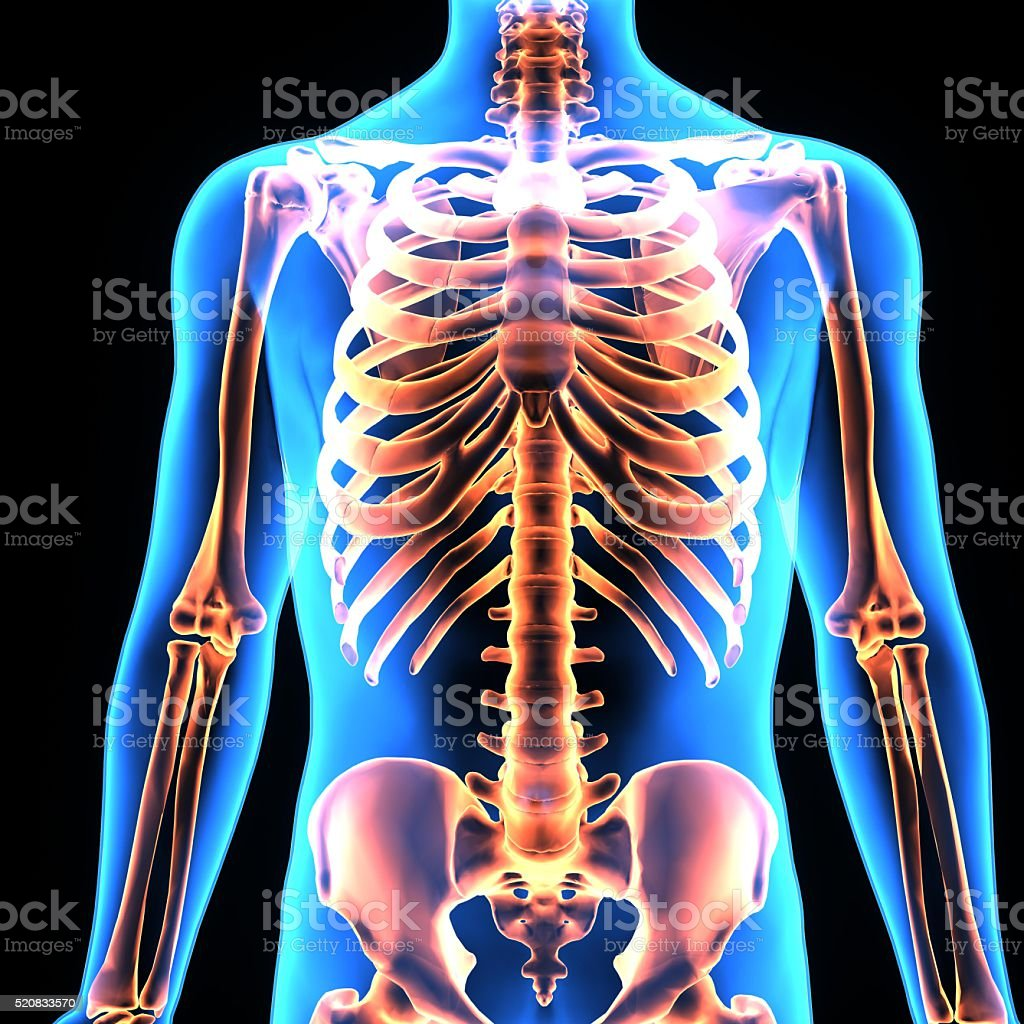 human body ribs stock photo