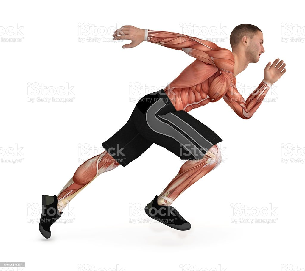 Human body, showing the muscles while running stock photo