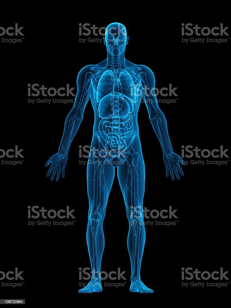 Human body X-ray stock photo