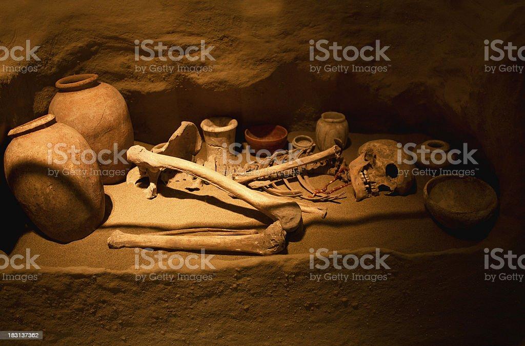 Human bones royalty-free stock photo