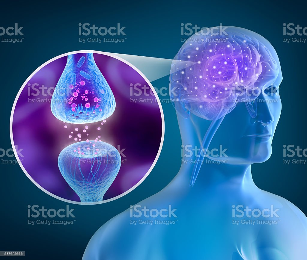 Human brain and Active receptor stock photo